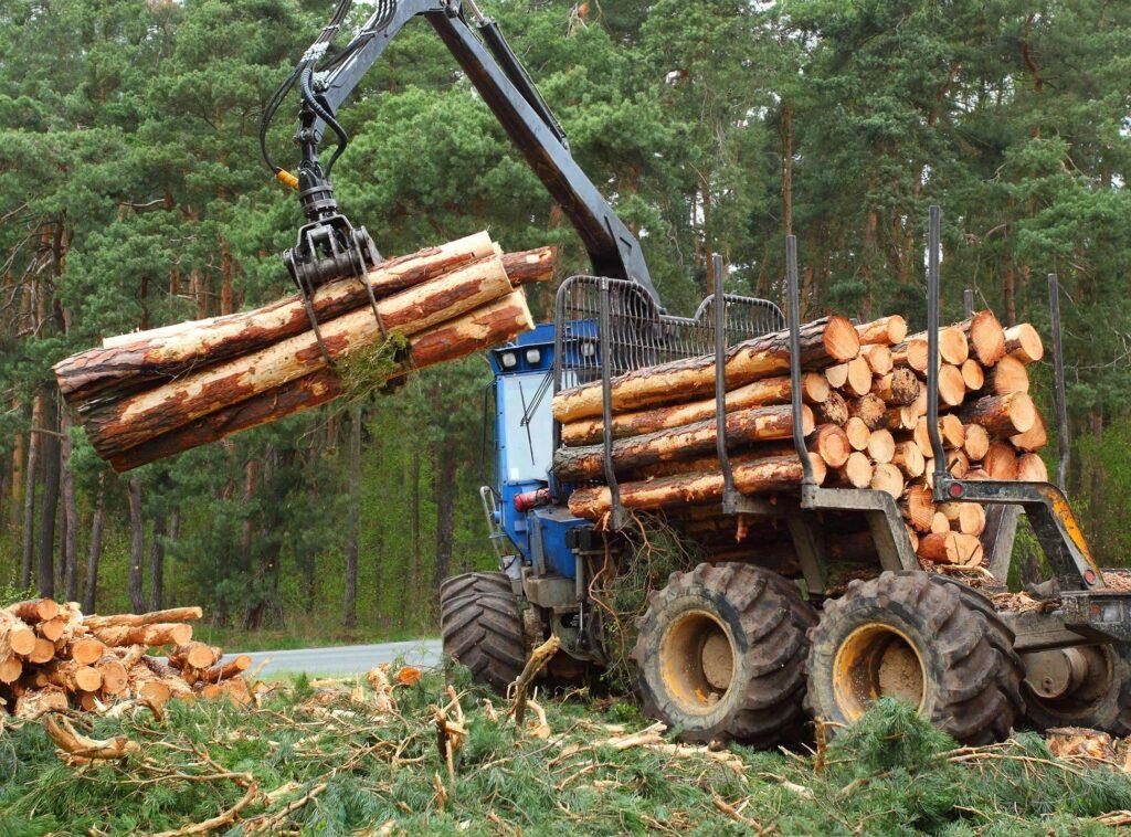 pennsylvania timber harvesting