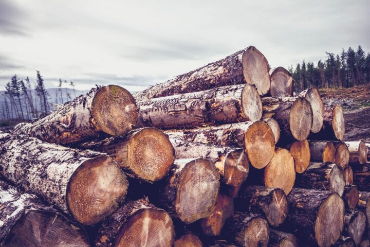 Get the best timber prices in Pennsylvania